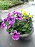 9.植木鉢